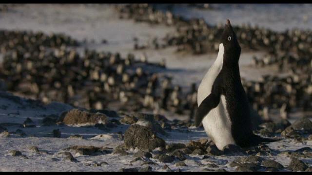 Pinguinul Steve, personajul unui documentar Disney despre schimbările climatice