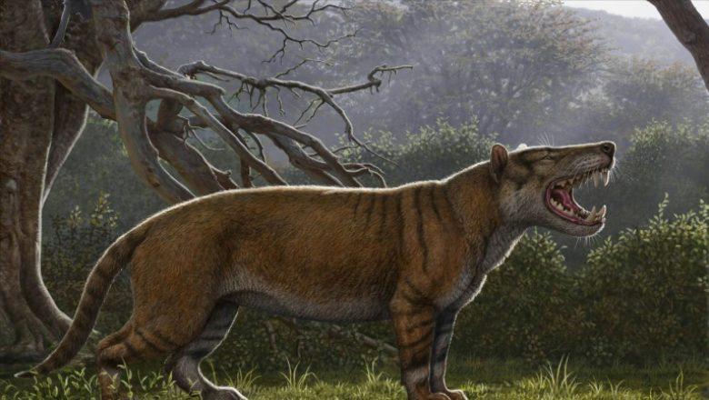 Cel mai mare mamifer carnivor care a trăit vreodată pe Pământ, descoperit în Kenya