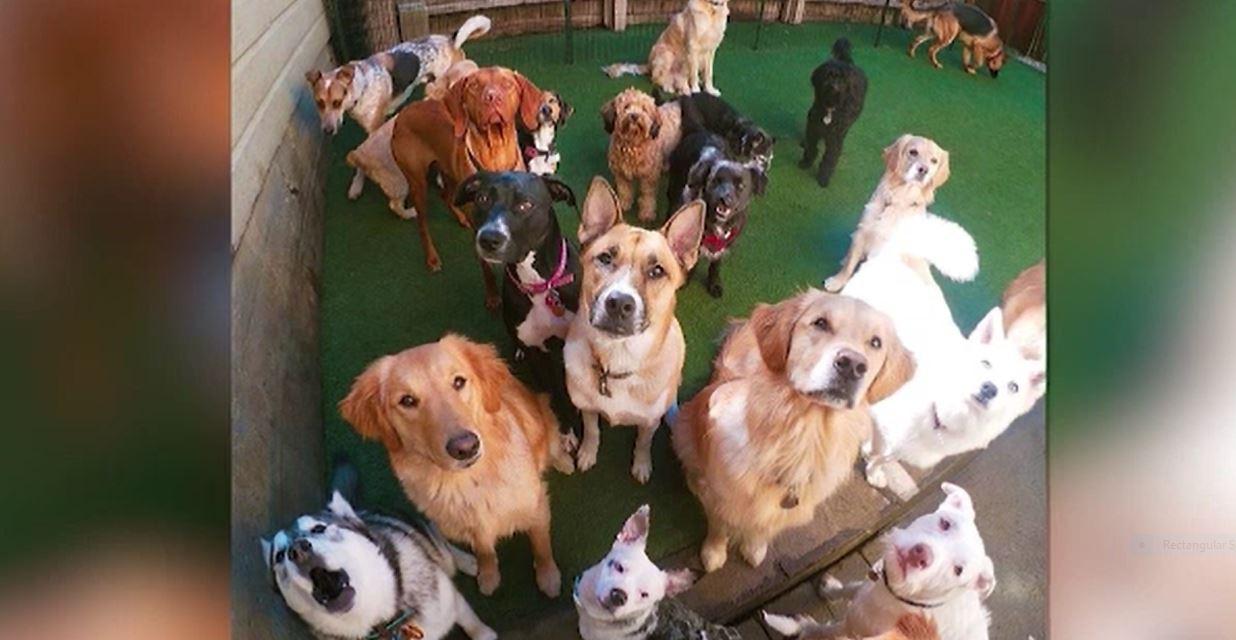 Gestul administratorilor unui adăpost de animale din San Francisco, în plină pandemie