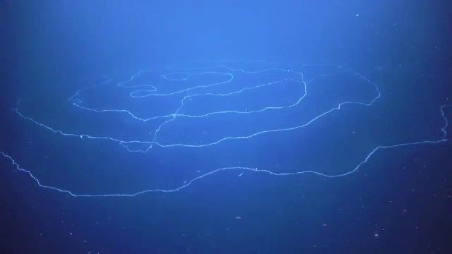 """""""Creatura bizară"""" descoperită de membrii unei expediții în Oceanul Indian"""