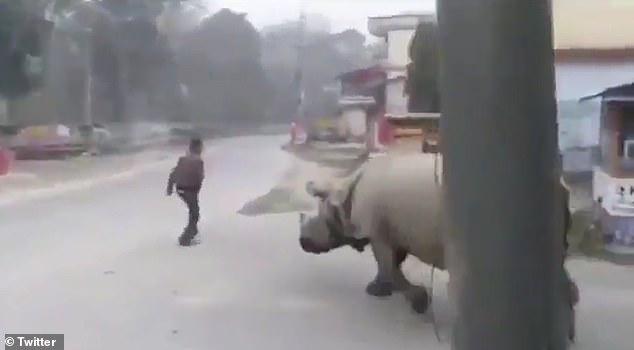 Era să fie lovit de rinocer! Ce se întâmplă când nu ești atent pe stradă