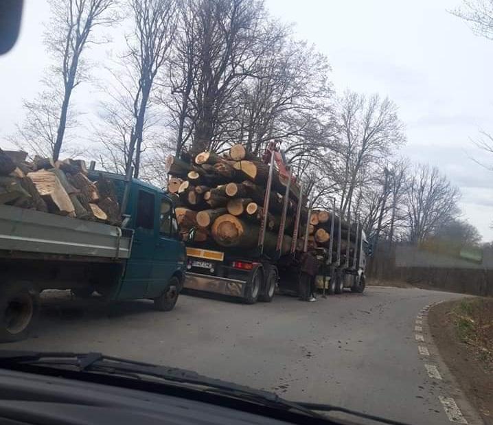 """Ministrul Mediului, despre defrișările din Pădurea Dobrovăţ: """"O campanie de dezinformare de zeci de mii de euro"""""""