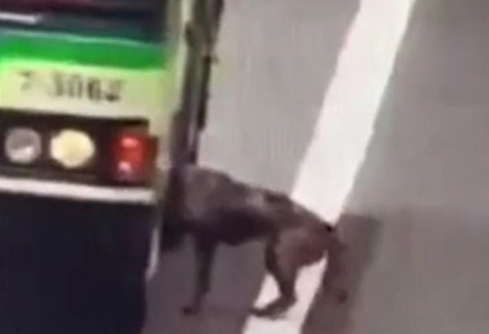 VIDEO. Un câine care s-a pierdut de stăpâna sa, salvat de șoferul unui autobuz pe o autostradă