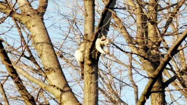 Misiune de salvare neobișnuită în Botoșani. O pisică a rămas blocată între crengile unui copac