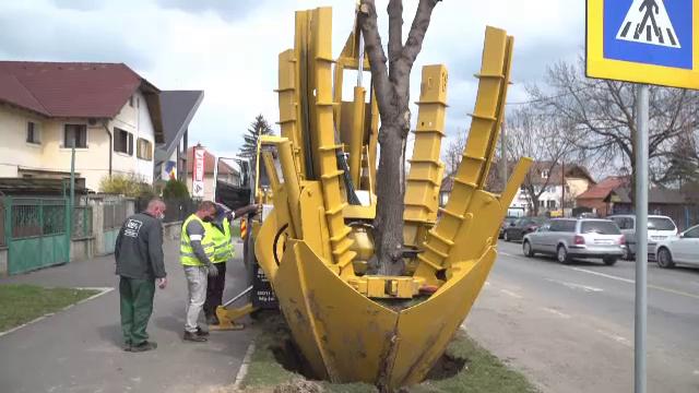 Arbori smulşi cu rădăcină şi mutaţi, în Sibiu, cu un utilaj folosit pentru prima dată în România