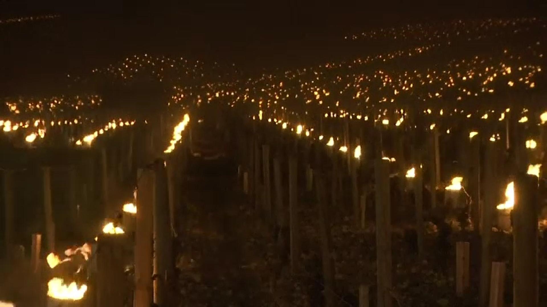 Viticultorii francezi au aprins focuri pentru a încerca să salveze producția de struguri din toamnă