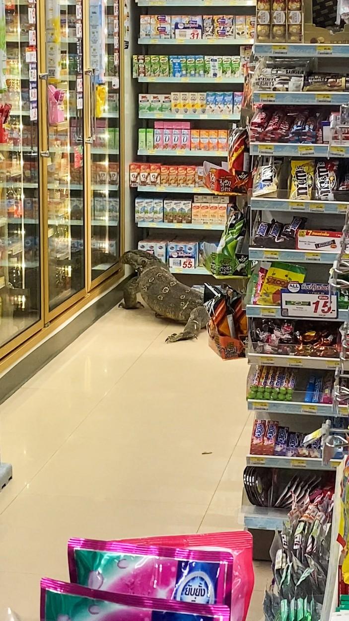 Video. O șopârlă de doi metri a intrat într-un supermarket din Thailanda. Ce s-a întâmplat la scurt timp