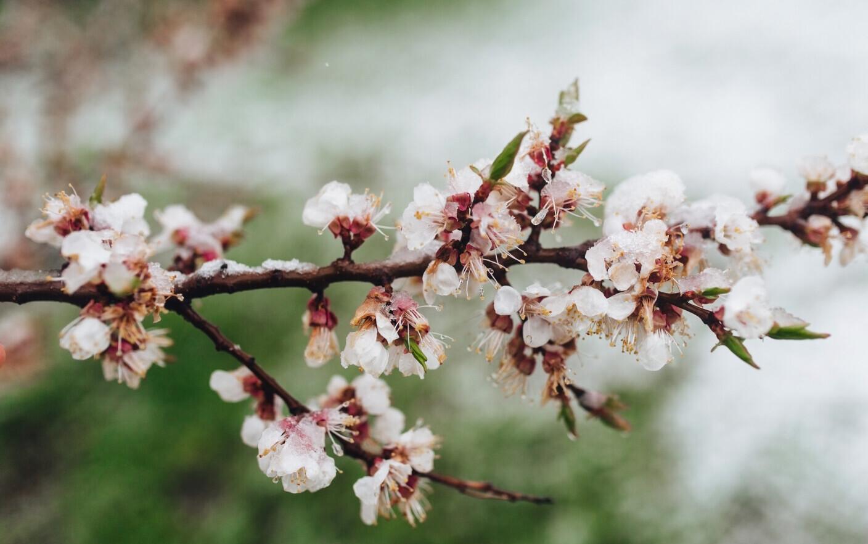 Vremea azi, 9 aprilie. Temperaturile rămân scăzute, iar la munte s-ar putea să ningă puțin