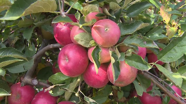 Cererea de puieți de pomi fructiferi a crescut de până la cinci ori față de anii trecuți