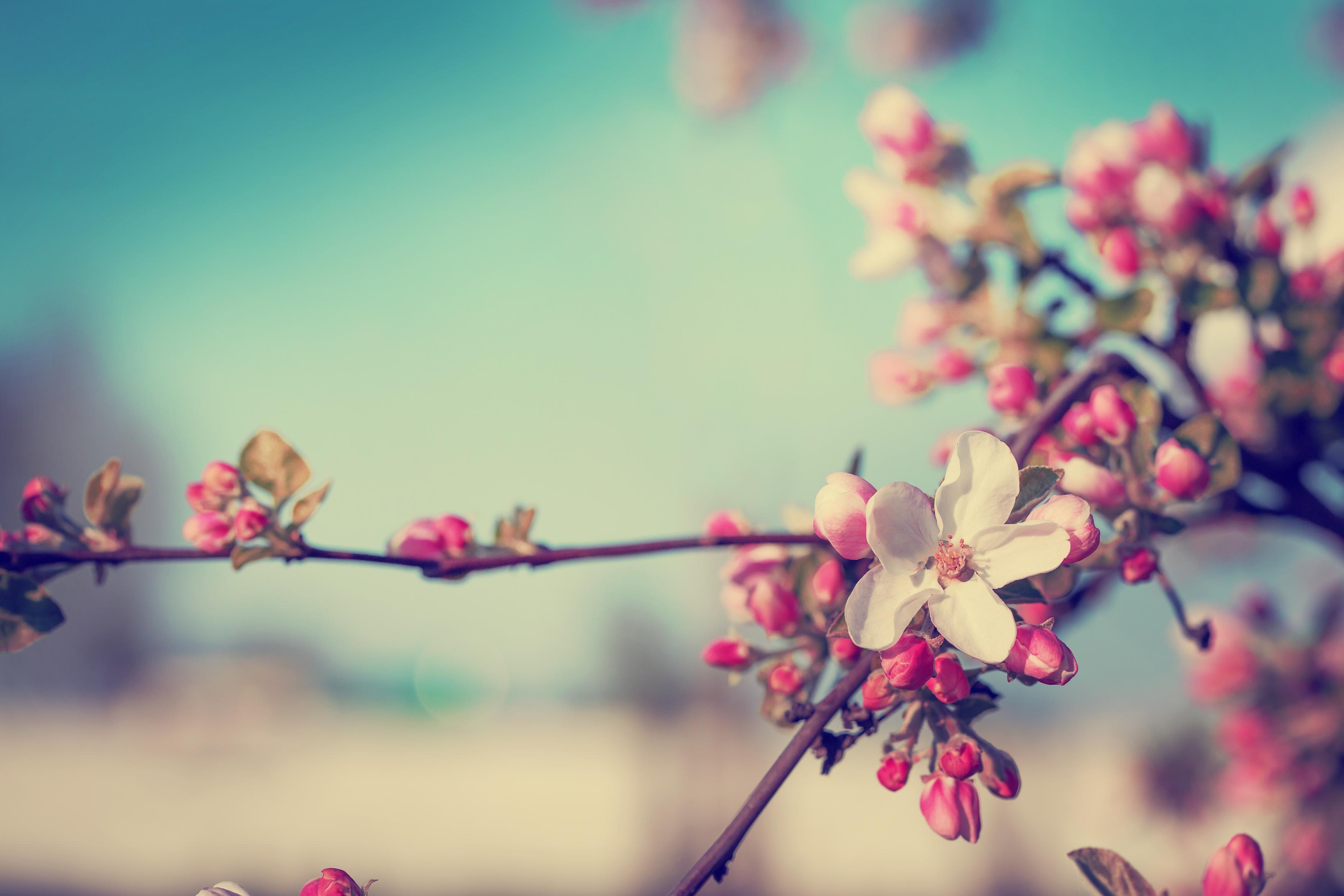 Cum va fi vremea de Florii 2021. Valori termice mai scăzute decât cele normale