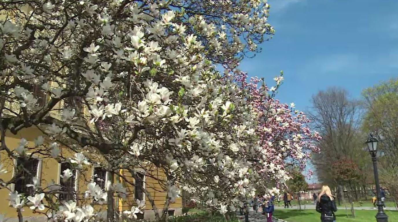 Grădina Palatului Episcopal din Oradea, o adevărată atracție pentru iubitorii de flori