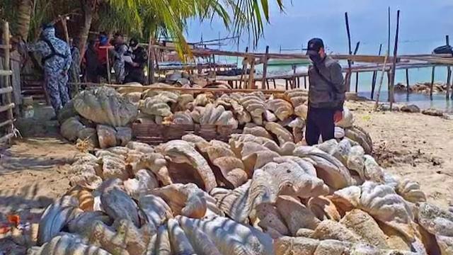 Captură record în Filipine. Ce au descoperit polițiștii. Valorează 25 de milioane de dolari și pot ajunge la 250 de kg