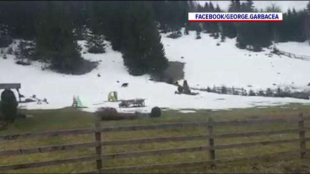 Cum au îndepărtat localnicii unei comune din Brașov un urs care dădea târcoale unui loc de joacă