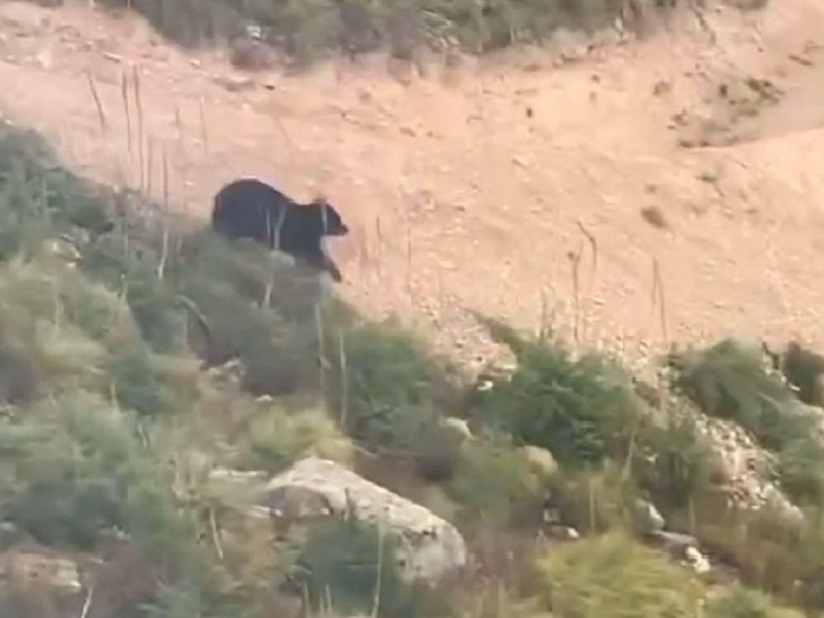 VIDEO. Momentul în care un biciclist este urmărit de un urs, în timp ce se plimba pe munte