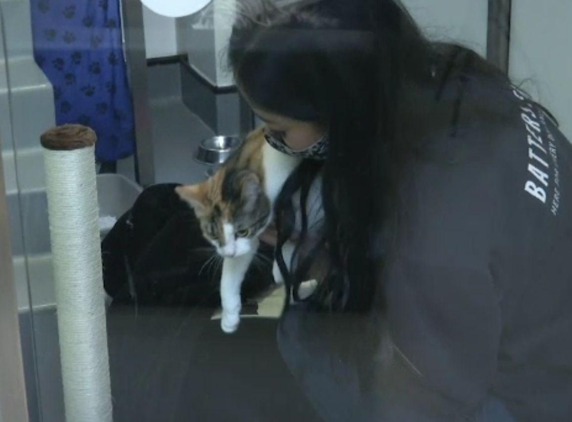 """Câinii și pisicile """"de pandemie"""" sunt date înapoi la adăposturi pe măsură ce Marea Britanie reintră în normalitate"""