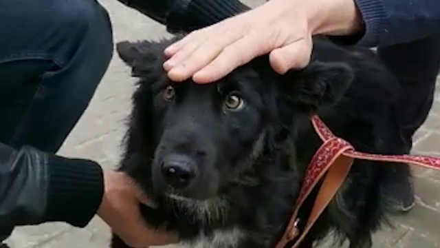 Doi câini chinuiți de copii în Pitești, prinși de poliție și duși la un adăpost