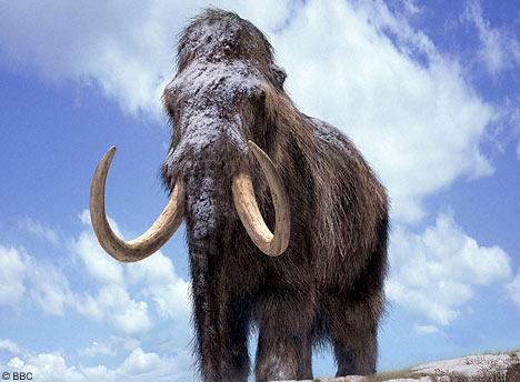 Doua fosile de mamut, descoperite in albia raului Moldova