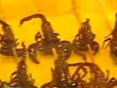Atacurile cu scorpioni, noua arma a