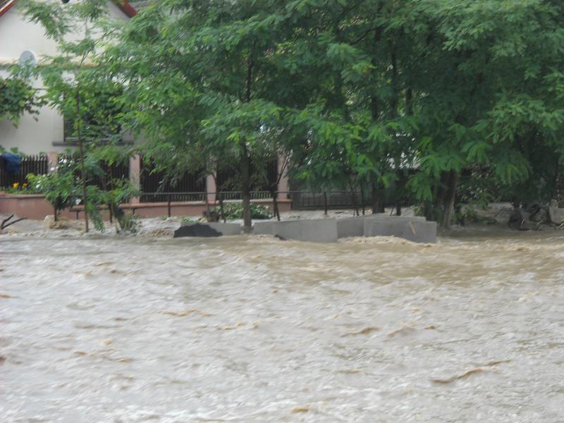 A venit potopul in Neamt! Sute de animale si pasari au murit inecate