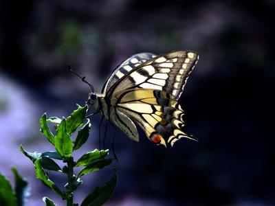 Expozitie de fluturi tropicali vii la Muzeul Zoologic din Cluj-Napoca