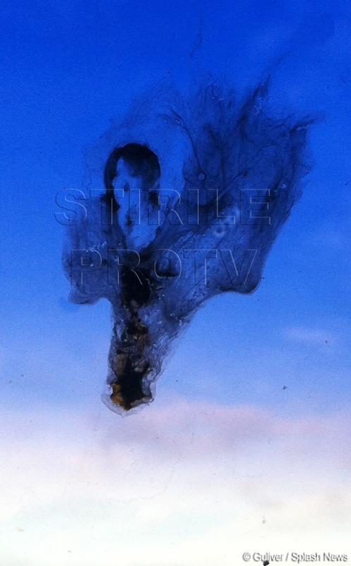 Cel mai ciudat lucru scos la vanzare pe eBay: chipul lui Michael Jackson, pe un parbriz. FOTO