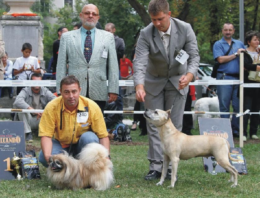 Expozitie canina la Expo Transilvania
