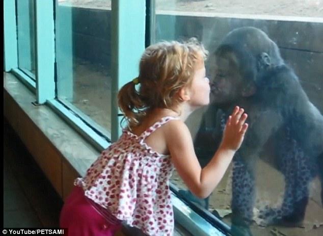 Dragoste la prima vedere. Momentul emotionant dintre o fetita si un pui de gorila