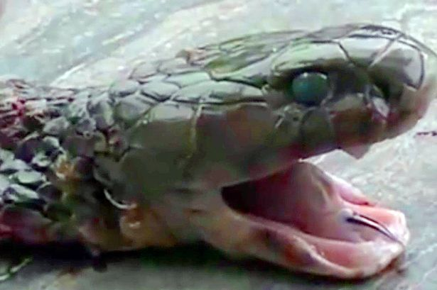 Pregatea o supa de cobra pentru clientii restaurantului cand a murit. S-a intamplat imediat dupa ce a taiat capul sarpelui