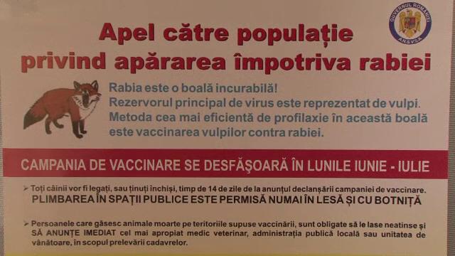 Invazie de vulpi intr-un sat din Braila. Oamenii se tem pentru animalele lor, dar si de o eventuala epidemie de rabie