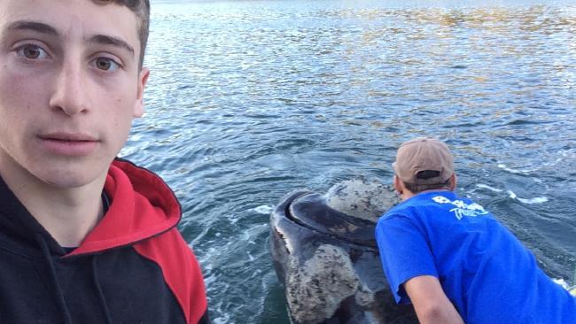 Un pescar si-a facut un selfie cu o balena care s-a apropiat de barca. Ce face in acest timp prietenul lui. VIDEO