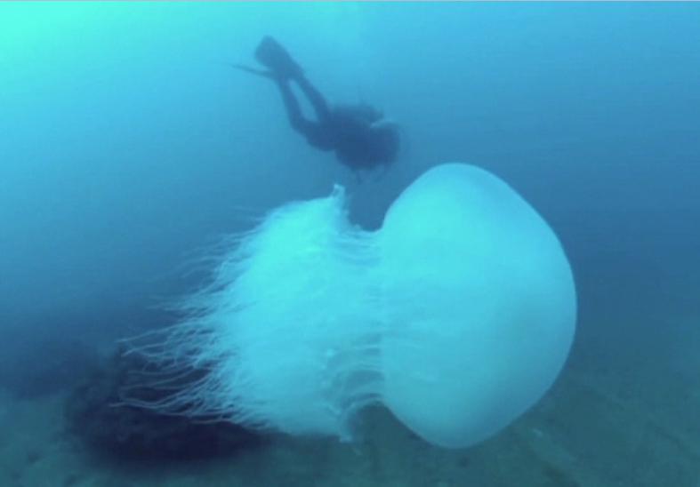 Invazie de meduze pe plajele de la Marea Mediterana. Care este motivul migratiei masive a creaturilor marine