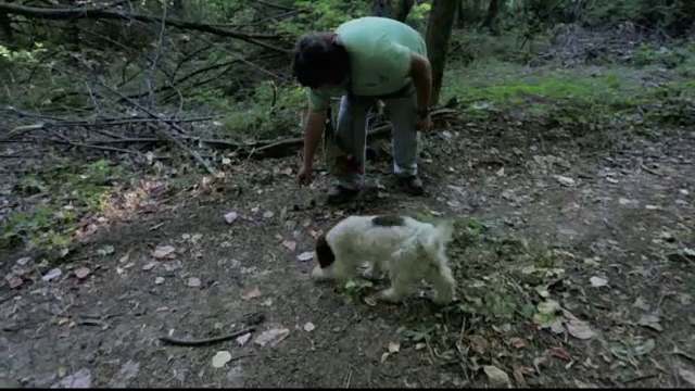 Tânăr din Neamț, prins de polițiști când recolta ilegal trufe. Cantitatea descoperită