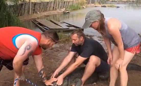Atacul necrutator al unui aligator agitat de turisti. Momentul in care un barbat a ramas fara un deget. VIDEO