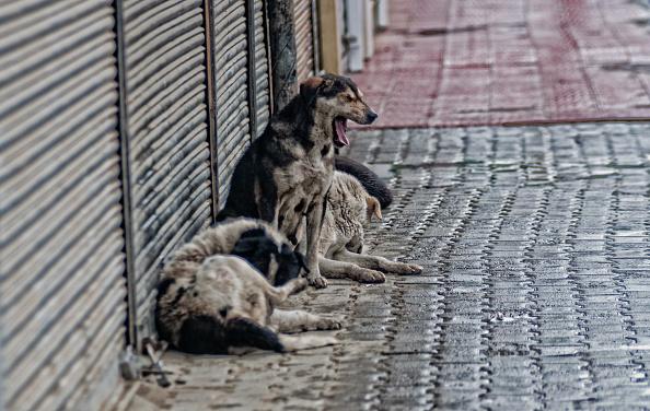 Femeie sfasiata de o haita de caini, la marginea orasului Iasi.