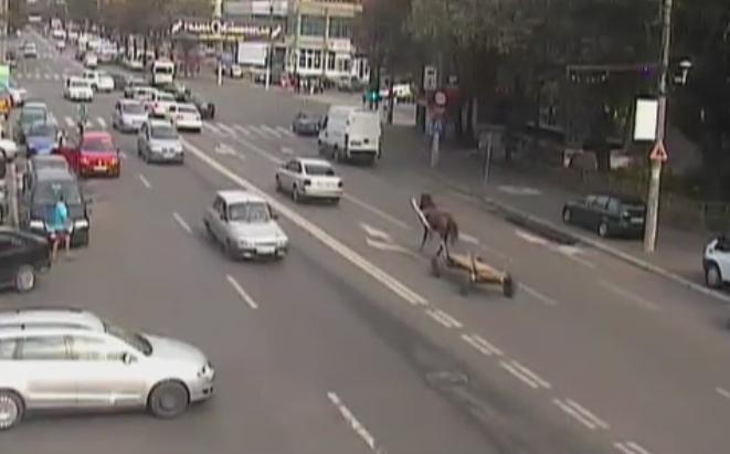 Panica in traficul din Braila, dupa ce un cal a scapat si fugit pe strada cu caruta dupa el. Trei masini au fost avariate