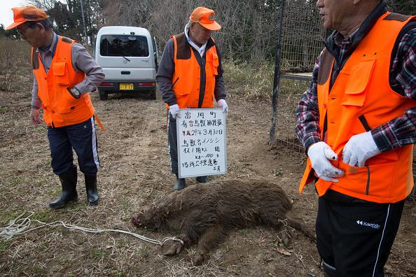 Bombă descoperită în incinta centralei nucleare japoneze Fukushima