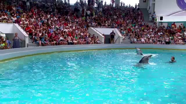 O orchestră i-a acompaniat pe cei doi delfini din Constanța, în timpul reprezentației