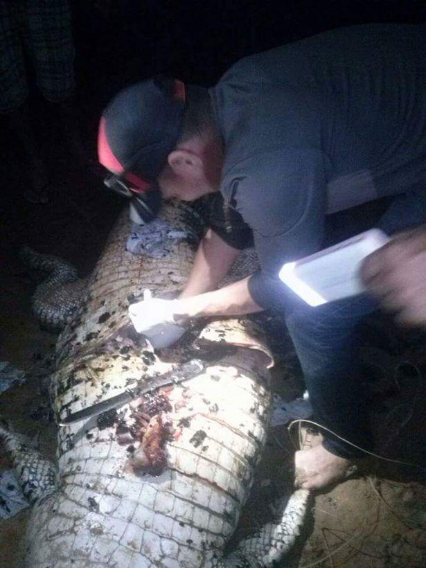 Au vânat un aligator de 4 metri și l-au eviscerat. Ce au găsit în interior