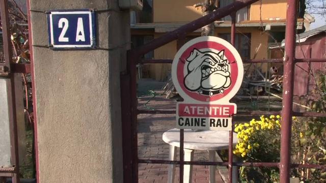 Copil ucis de câine Amstaff. Proprietarul, acuzat de ucidere din culpă