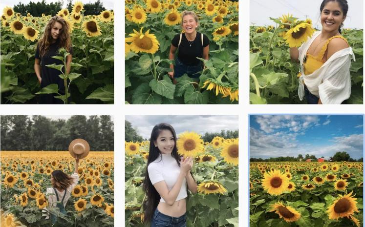 Mii de oameni au creat haos pentru a se fotografia într-un lan de floarea soarelui