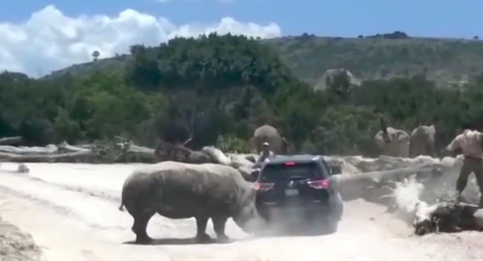 Reacția nervoasă a unui rinocer, după ce câțiva turiști l-au deranjat