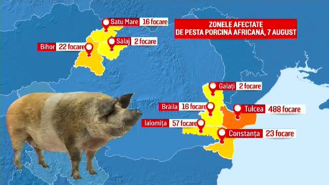 """Criza pestei porcine s-a """"răspândit"""" la cultivatorii de porumb. Ordinul dat de Daea"""