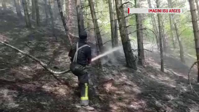 Incendiu puternic într-o pădure de pin, în Argeș. Intervenția dificilă a pompierilor