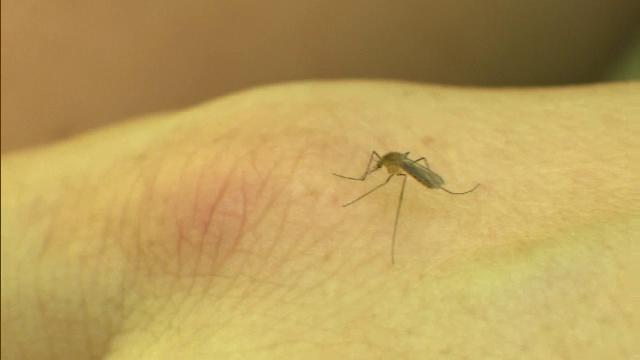 Un nou deces provocat de virusul West Nile în România. Măsurile anunțate de autorități