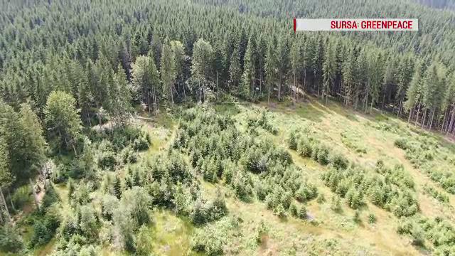 Greenpeace: România pierde 3 hectare de pădure pe oră. Reacția directorului ROMSILVA