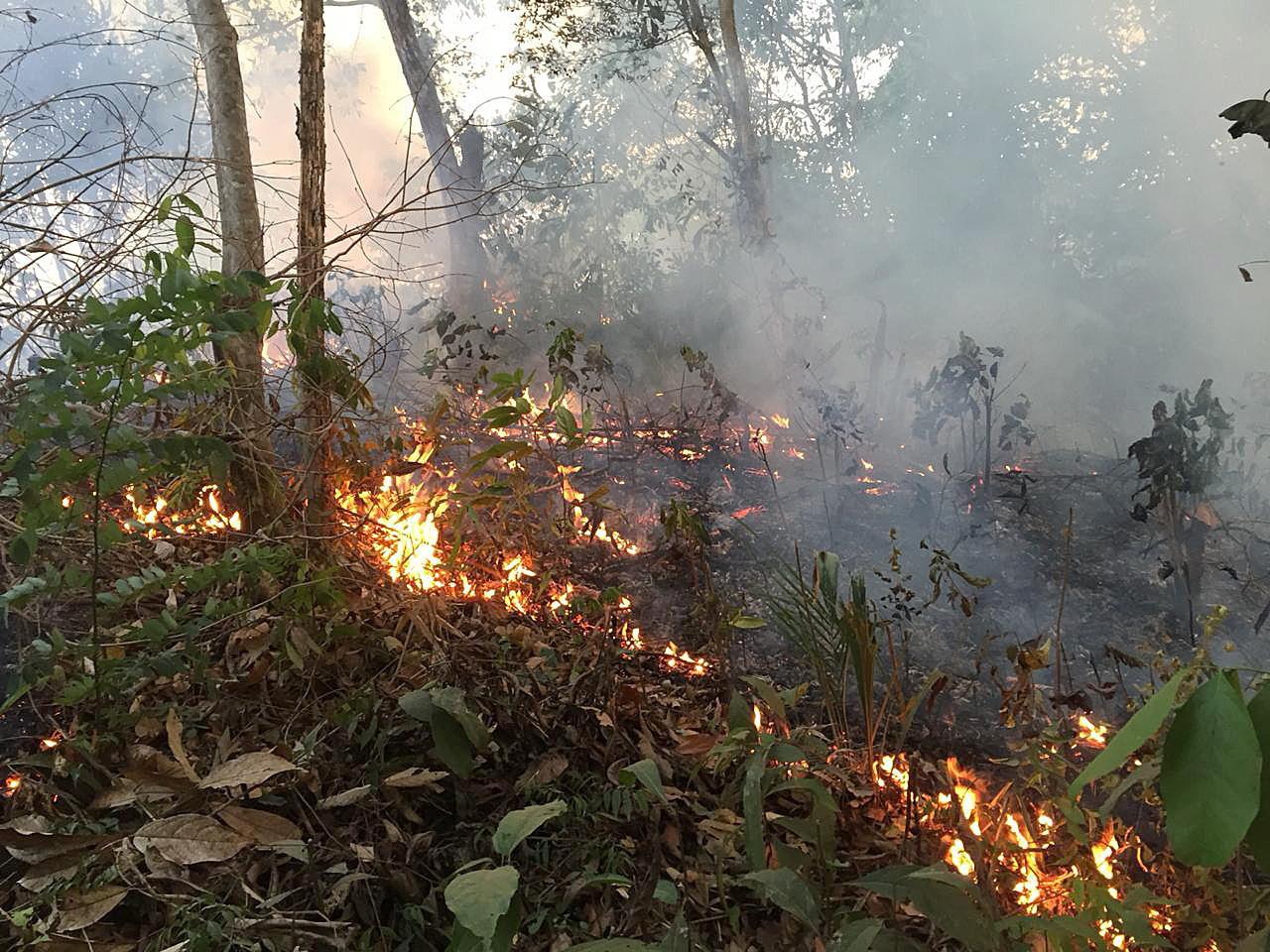 """Forbes: Tot ce s-a spus despre incendiile din Amazon și """"plămânul planetei"""" este greșit"""