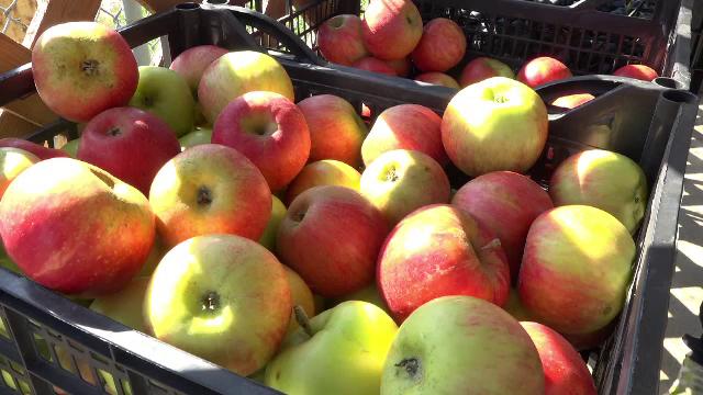 Vremea capricioasă i-a adus pe producătorii de mere aproape de pragul falimentului