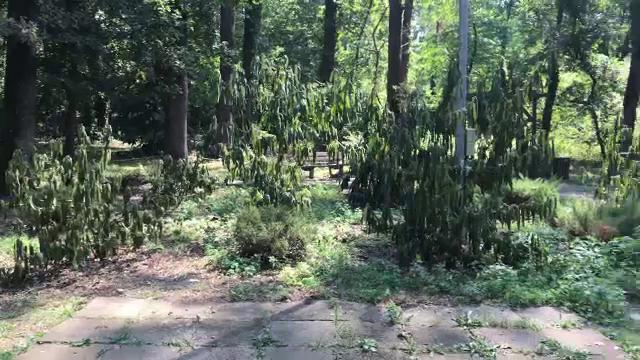 Imagini dezolante la Zoo Timişoara, unde în ultimii ani au murit o vizitatoare şi 2 zebre