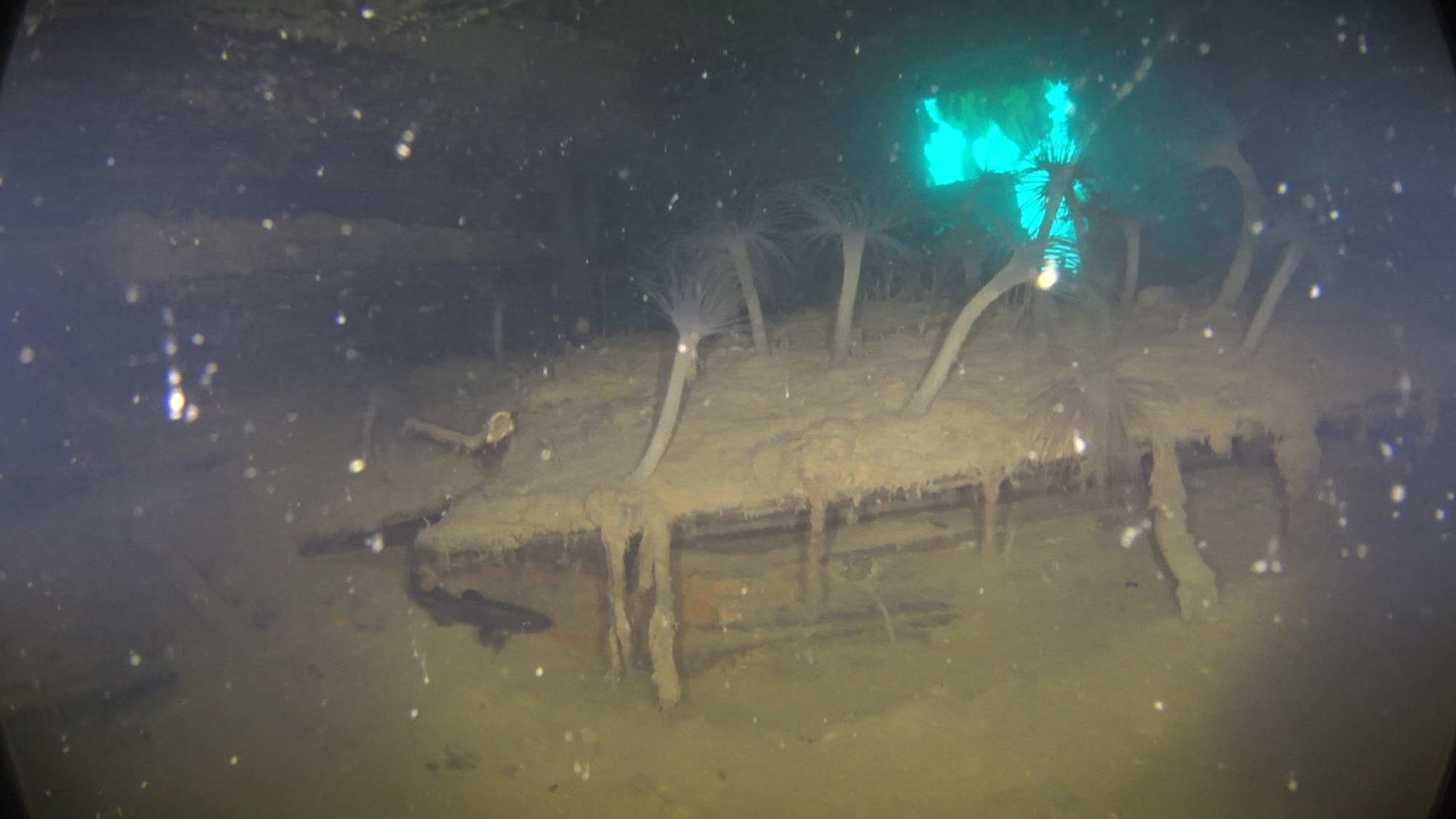 Cum arată epava unei corăbii legendare. A dispărut misterios în 1845