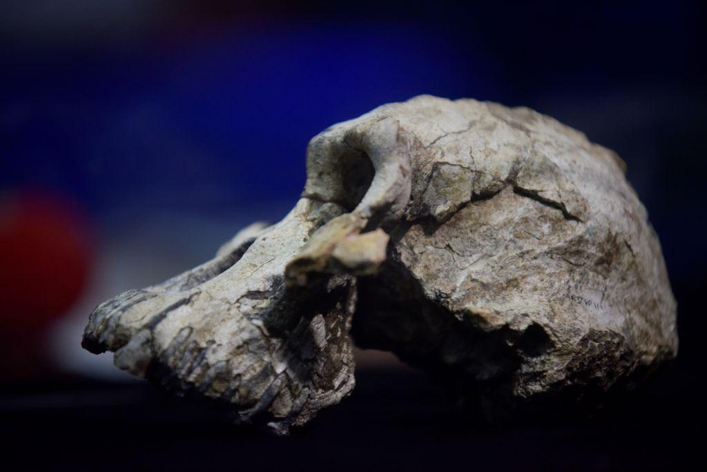 Descoperire incredibilă: Craniu vechi de 3,8 milioane de ani, găsit în Etiopia
